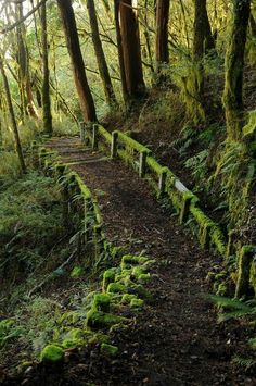 Moss covered path