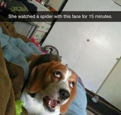 These funny videos of funny dogs will make you laugh. Hope you enjoy these funny dog videos. This funny dogs compilation doesn't include funny dog vines. Funny Animal Jokes, Funny Dog Memes, Really Funny Memes, Funny Animal Videos, Cute Funny Animals, Funny Relatable Memes, Animal Memes, Cute Baby Animals, Funny Cute