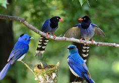 Wildlife Videos - Beautiful Animals and birds, every creature has family...