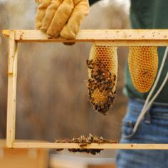 .: beekeeping | how and why to go foundationless. :.