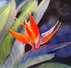 Bird of Paradise   -  Jen Hayden
