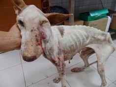 Tú también la has difundido?. La conocida organización internacional en defensa de los animales Igualdad Animal ( www.igualdadanimal.org...