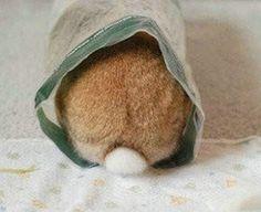 tiny bun bottom