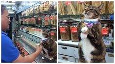 Store Cat In Hong Kong Is An Internet Sensation… Even Though Her Owners Aren't On Social Media