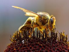 Bee-killing neonicotinoid pesticides even worse than previously thought