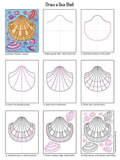 how to draw sea shells diagram