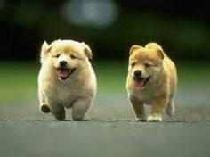 Race of the pups