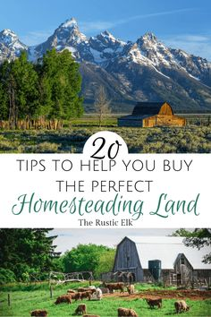Looking for property to buy can be overwhelming and special considerations need to be made when looking for homesteading land. These 20 tips will help you find the property of your dreams and avoid common pitfalls. Homestead Land, Off Grid Homestead, Homestead Living, Farms Living, Homestead Property, Homestead Survival, Urban Chickens, Living Off The Land, Survival Skills