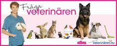 Nu kan du fråga våra veterinärer om ditt husdjur