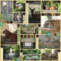 Image from http://www.mousescrappers.com/photos/data/1127/tigers_and_More_p2_Maharajah_Jungle_Trek_AK_Nov_13_2012_smaller.jpg.