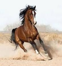 cuadros de caballos pura sangre ile ilgili görsel sonucu