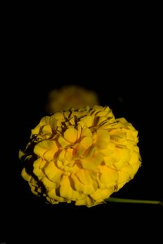 Yellow Flower by Amit Kaushal on 500px