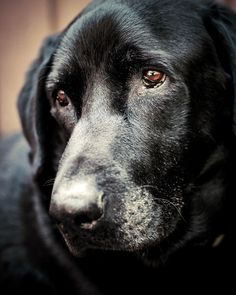 Handsome Connor by Sarah Bourque on 500px
