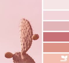 Cacti Tones via @designseeds #seedscolor #color #colorpalette #color #palette #pallet #colour #colourpalette #design #seeds #designseeds #pastel #pastels #pink #modernpink #millenialpink #coral #peach #cactus #cacti