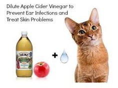 Get rid of ringworm by using apple cider vinegar on pets skin