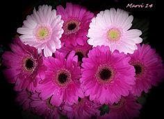 https://flic.kr/p/ke87yx | Bouquet de gerberas