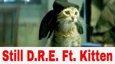 """ is a song by American rapper Dr. Funny Cat Videos, Funny Cats, Cat Behavior, Little Kittens, Youtube, Animals, Animales, Animaux, Funny Kitties"