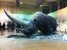 Elasmotherium or the Siberian Unicorn is an extinct genus of giant rhinoceros endemic to Eurasia during the Late Pliocene through the Pleistocene era. sibiricum was the size of a. Unexplained Phenomena, Dinosaur Fossils, Extinct Animals, Art Sculpture, Prehistoric Creatures, Rhinoceros, Mammals, Creepy, Meet