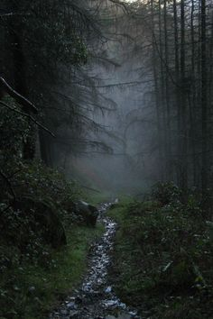 rostrevor forest, ireland by darren giddins Beautiful World, Beautiful Places, Beautiful Pictures, Slytherin Aesthetic, Dark Forest, Belle Photo, The Great Outdoors, Mists, Places To See