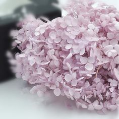 Preserved Fresh Flower Taro Purple Fresh by sunnyfashionstore