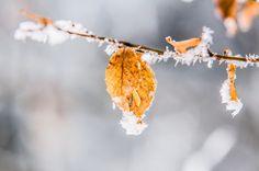 Herzenswärme Real Nature, Winter, Flowers, Plants, Winter Time, Plant, Royal Icing Flowers, Flower, Florals