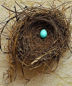 Robins Nests at Home are things I always miss