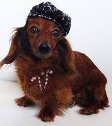 Rosie - October is Adopt-a-Dog Month | Modern Dog magazine - the best dog magazine ever