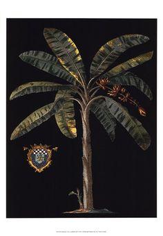 Palm & Crest on Black II