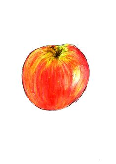 Red apple print pen and ink illustration fruit by BernieandRoseArt