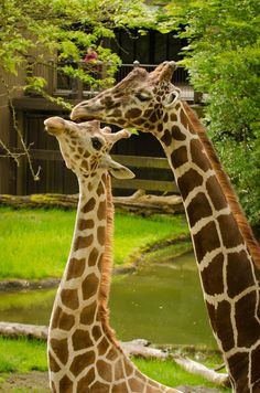 $4 admission at Oregon Zoo on the second Tuesday of each month
