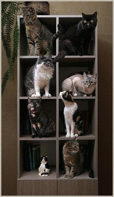 Cats Land All of them are beautiful. Thewitchescircle