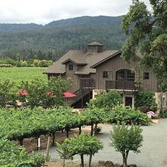 Salvestrin | Discover all things #NapaValley at NapaValley.com