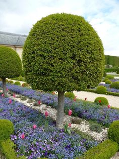 Topiary, forget-me-beds, thoughts and tulips, formal garden in front of the Orangerie Parc de Sceaux, Hauts-de-Seine, April 21, 2012, picture Alain Delavie
