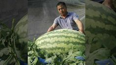 Watermelon challenge and Health benefits