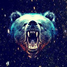 Da Bears !