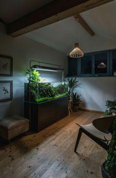 Aquarium Einrichten, Wohnzimmer, Aquarium Aquascape, Riff Aquarium, Planted  Aquarium, Aquascaping,