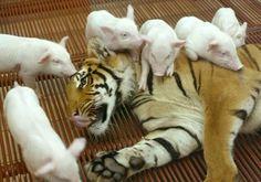 animais                                                       …