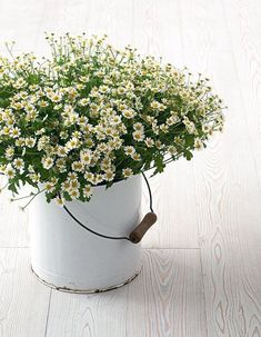 I love these tiny ones! I would have these throughout frangipanis in a bouquet Simple Flowers, My Flower, Fresh Flowers, White Flowers, Beautiful Flowers, Happy Flowers, Rustic Flowers, Summer Flowers, Deco Floral