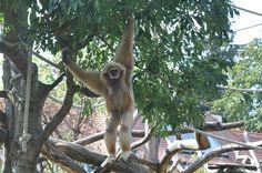Zoo - Vienna Vienna, My Photos, Animals, Animales, Animaux, Animal, Animais