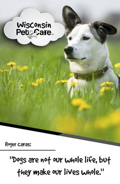 Dogs are the reason for living. #WisconsinPetCare