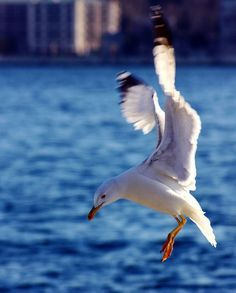 Image result for seagull landing