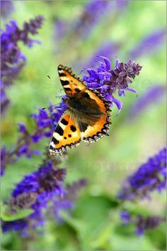 Emotion-Art - Schmetterling im Sommer
