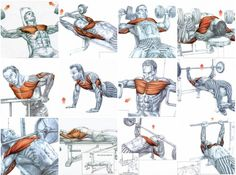 Gain Chest Muscle Using Only 3 Super Effective Exercises is part of Chest workouts - Fitness Workouts, Gym Workout Tips, Weight Training Workouts, Biceps Workout, Training Plan, Fun Workouts, Training Classes, Shoulder Workout Routine, Best Chest Workout