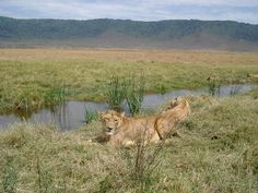 Zone de conservation de Ngorongoro Tanzanie