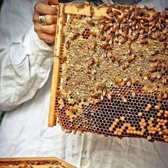 flow hive response 055