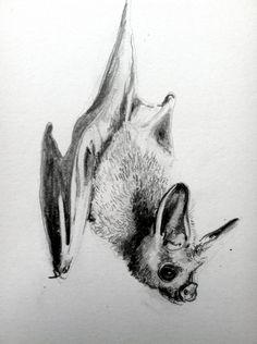 Bat Drawing 16. by Holly MacKay $25 via Etsy