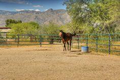 10519 E Tanque Verde Road, Tucson, AZ 85749 Garage Guest House, Flood Zone, Sold Sign, Desert Plants, Sea Fishing, Maine House, Tucson, Acre