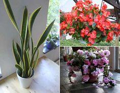 12 plantas de interior que purifican el aire de nuestra casa.