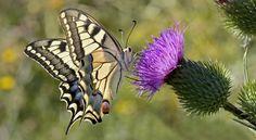 #butterflies #butterfly #nature #beautiful #amazing #bellissime #farfalla #farfalle #flowers #flower #fiori #natura #fiore #incanto #meravigliedellanatura #meraviglie #white #bianco #black #nero #stripes #strisce #grey #grigio #orange #arancio