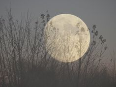 A beautiful shot of the Nov. 2016 supermoon near Hawarden, Iowa by Marilyn Cochrun Beautiful Moon Images, Nov 2016, Good Night Moon, Super Moon, Pretty Pictures, Iowa, Moonlight, The Outsiders, Backyard